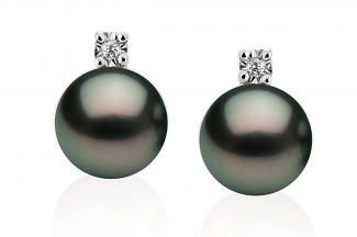 Black Freshwater Diamond 4 Prong Pearl Earrings 8.00 - 8.50mm
